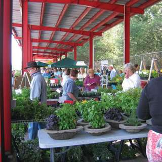 CANCELLED: 31st Annual Asheville Spring Herb Festival