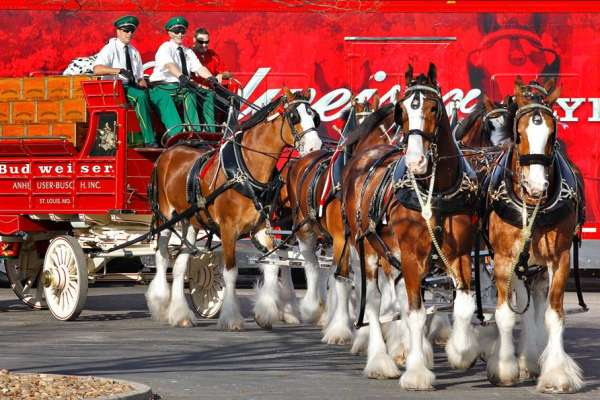 60th Annual Houston St. Patrick's Parade
