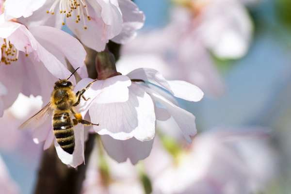 Hands-On Houston: Bamboo Bee Houses