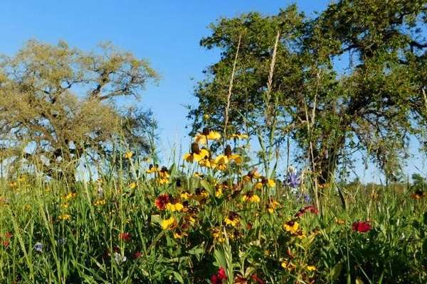 National Public Lands Day with Memorial Park Conservancy