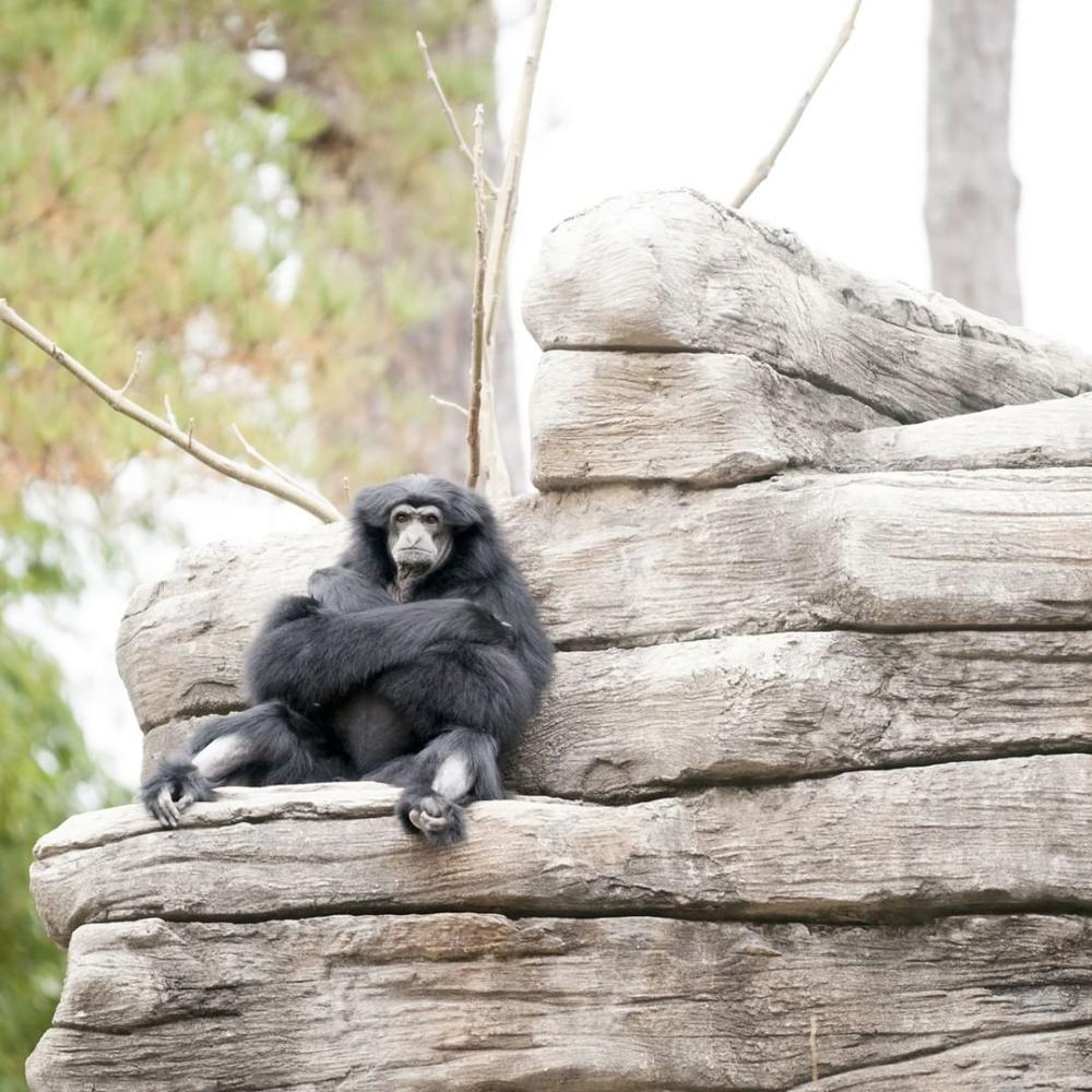 Monkey at Riverbanks
