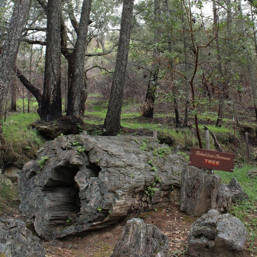 Petrified Forest Calistoga
