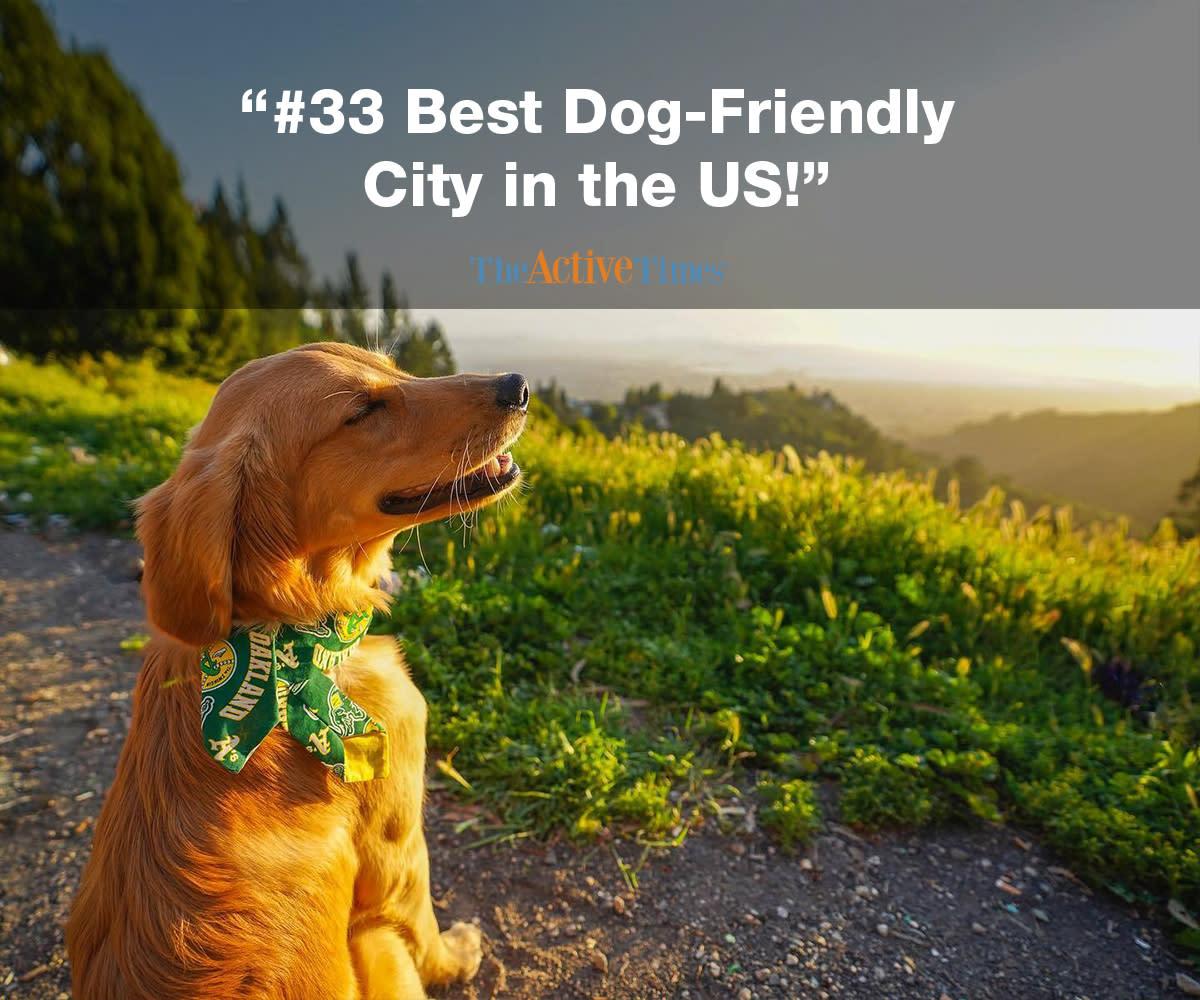 33 Best Dog-Friendly City Accolade