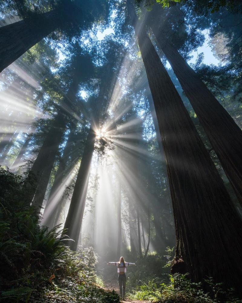 Woman standing with arms stretched wide between trees at Redwood Regional Park