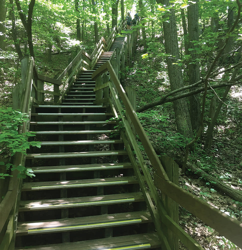 Haley Collins Succession Trail stairs going up