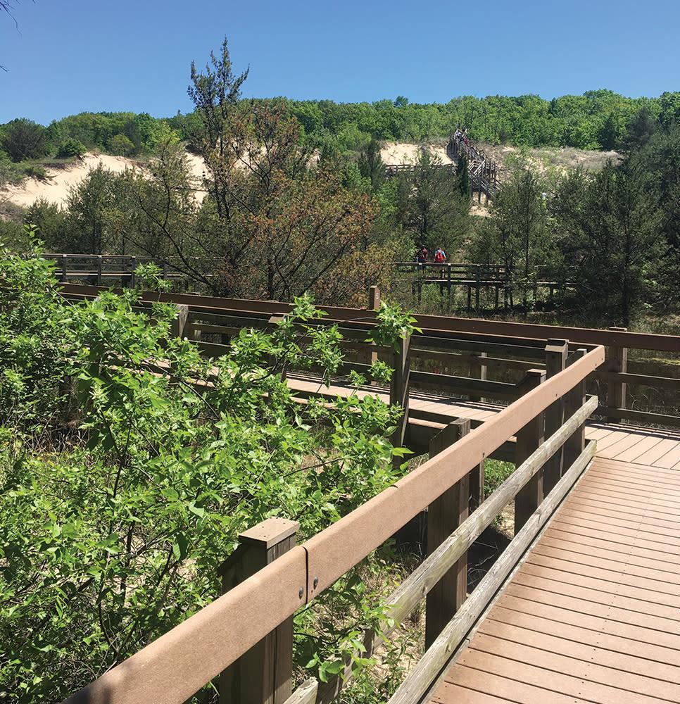 Haley Collins Succession Trail wooden path