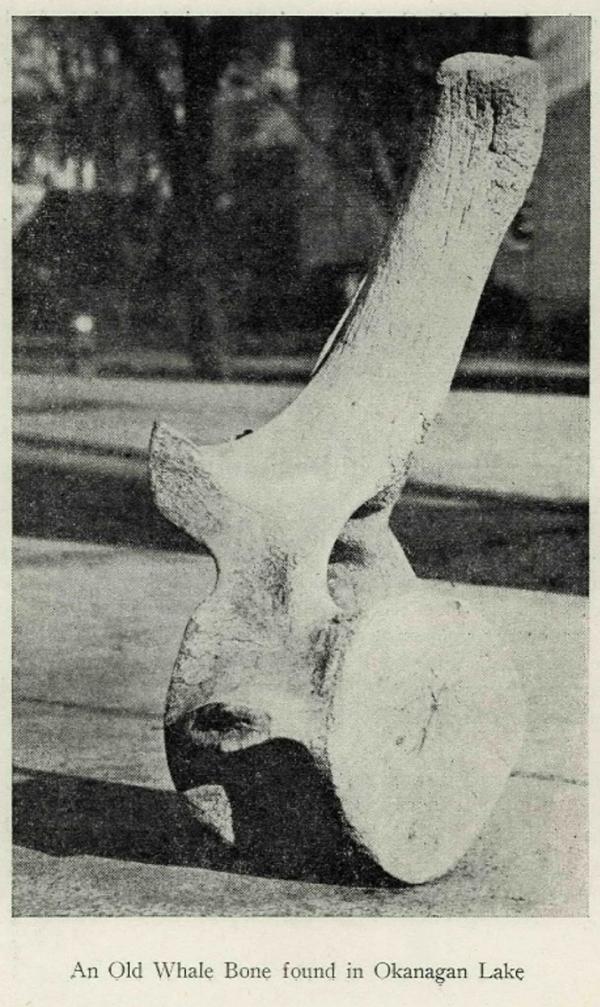 An Old Whale Bone Found in Okanagan Lake