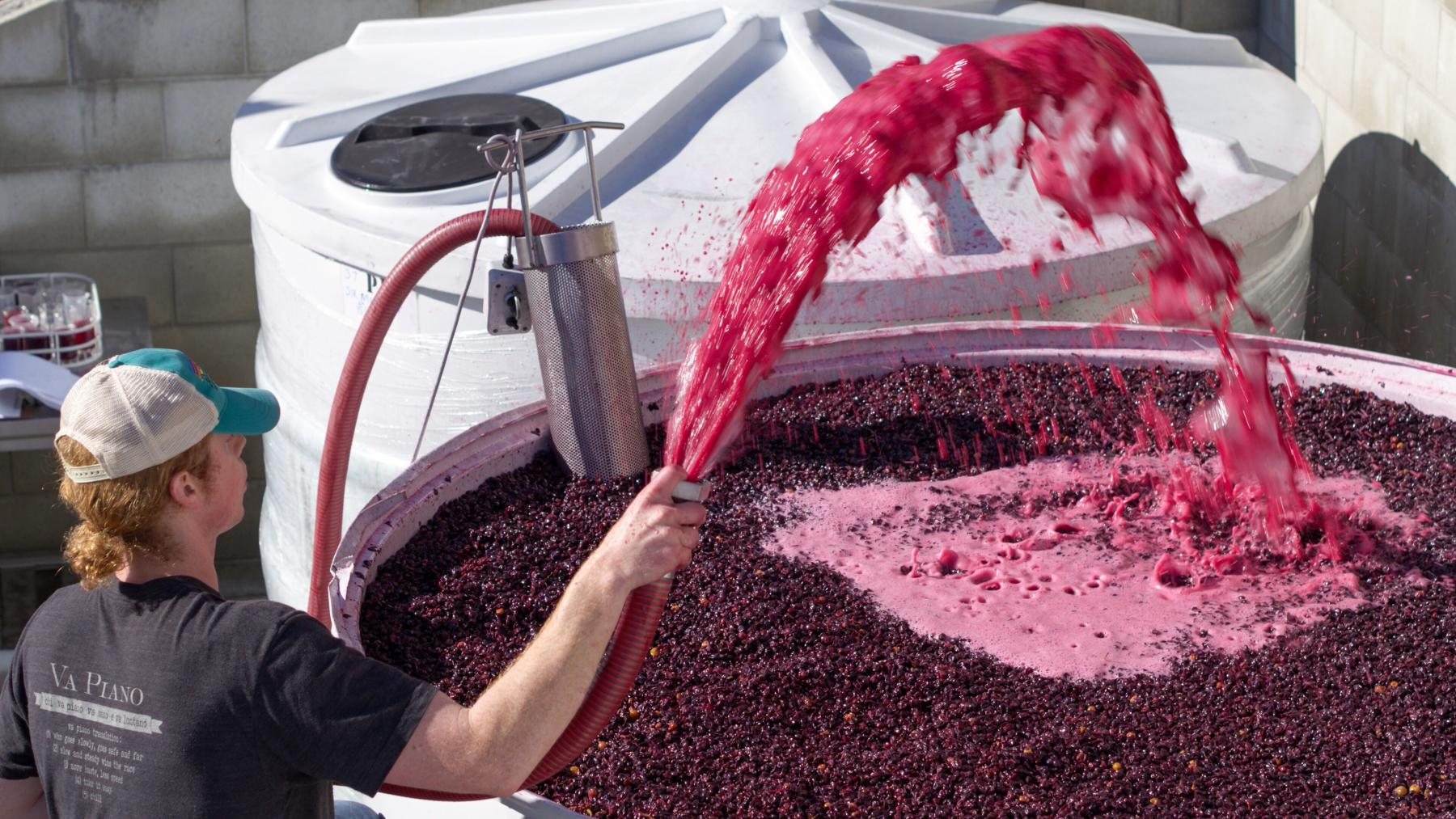 Gibbston Valley Winery - Wine Making