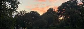 Sunset Stroll Garden Tours