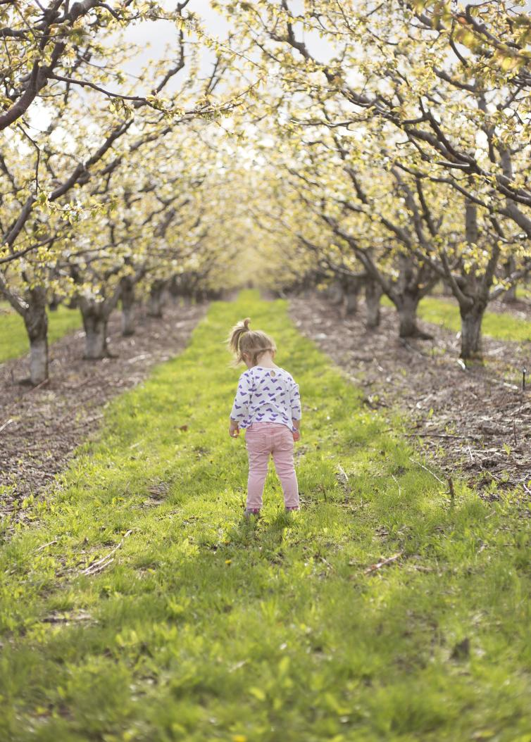 Orchards in bloom