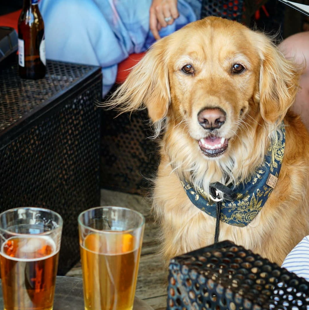 Two pint glasses and a pup on the patio of The Local Chandler