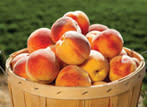 Peaches Thumb