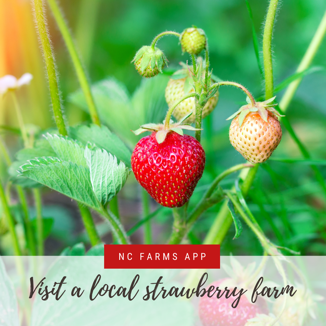 NC Farms app banner ad promoting visiting a local Strawberry Farm in Johnston County, NC.