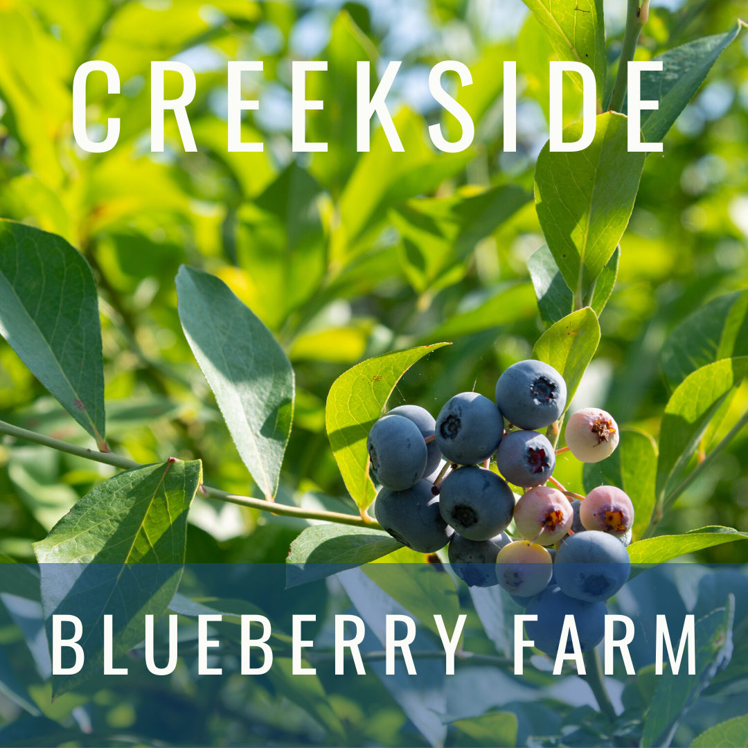 Creekside Blueberry Farm offers families a fun stop for picking blueberries, and more, Selma, NC.