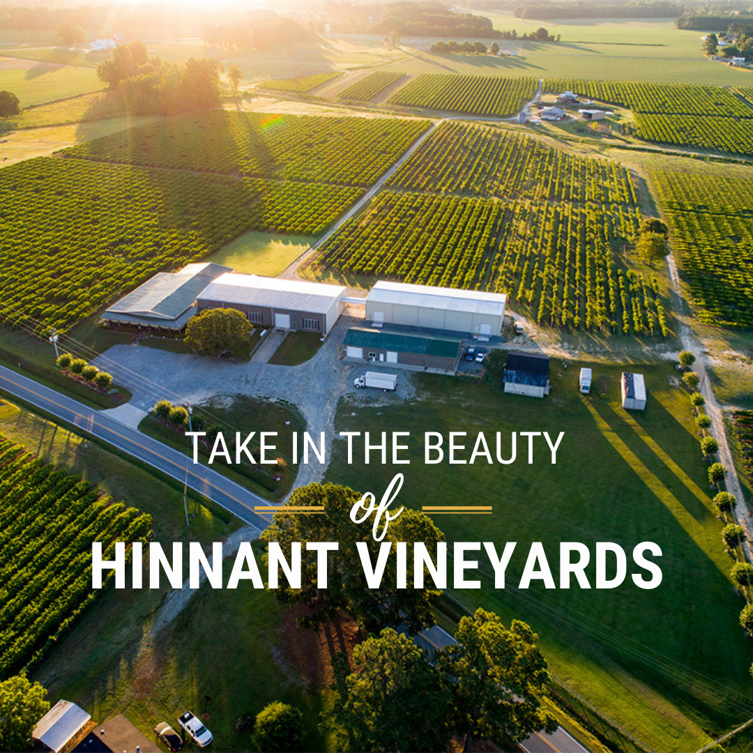 Hinnant Vineyards banner ad promoting visitors to enjoy the beauty of the vineyards in Pine Level, NC.
