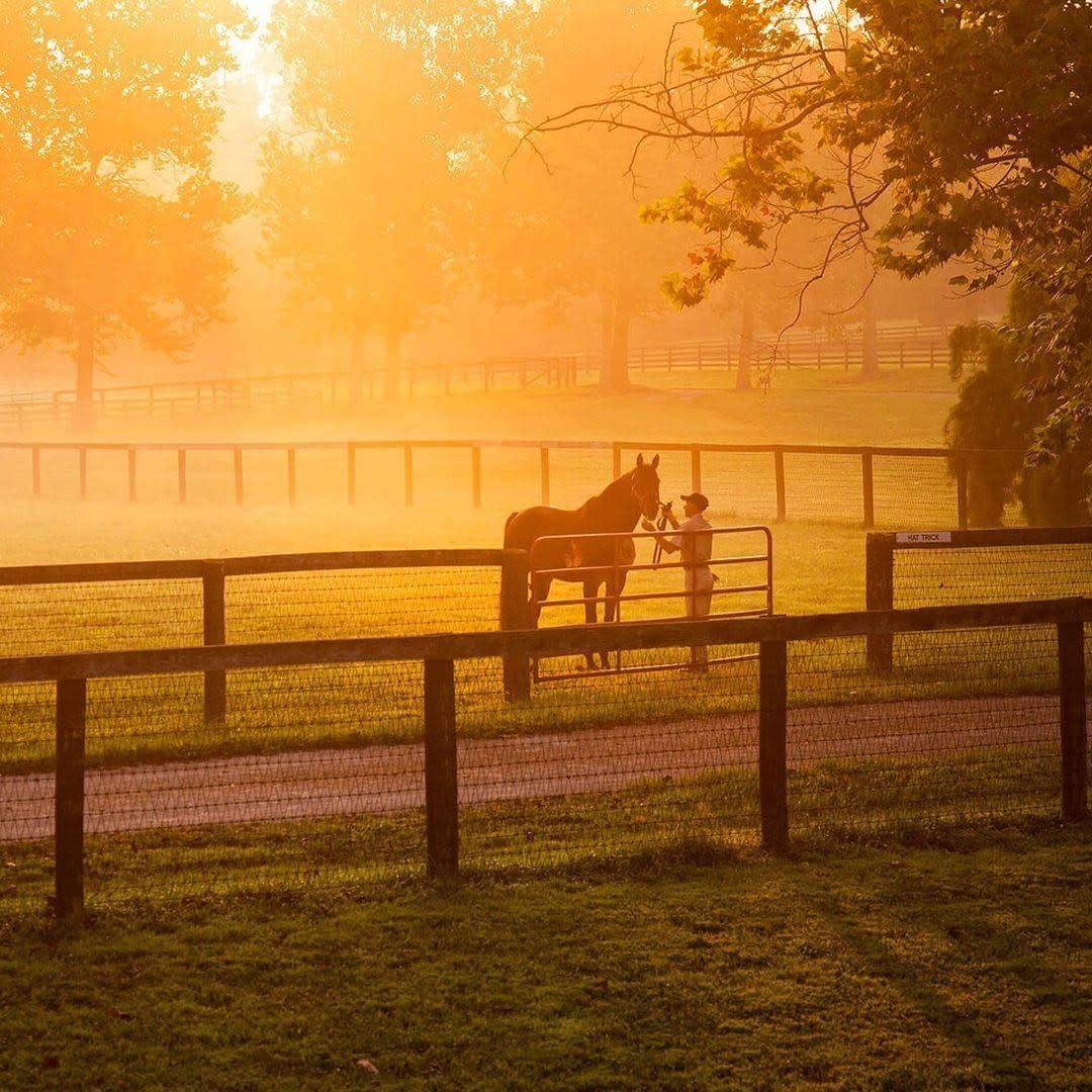 kybridemag-Instagram-horse sunset