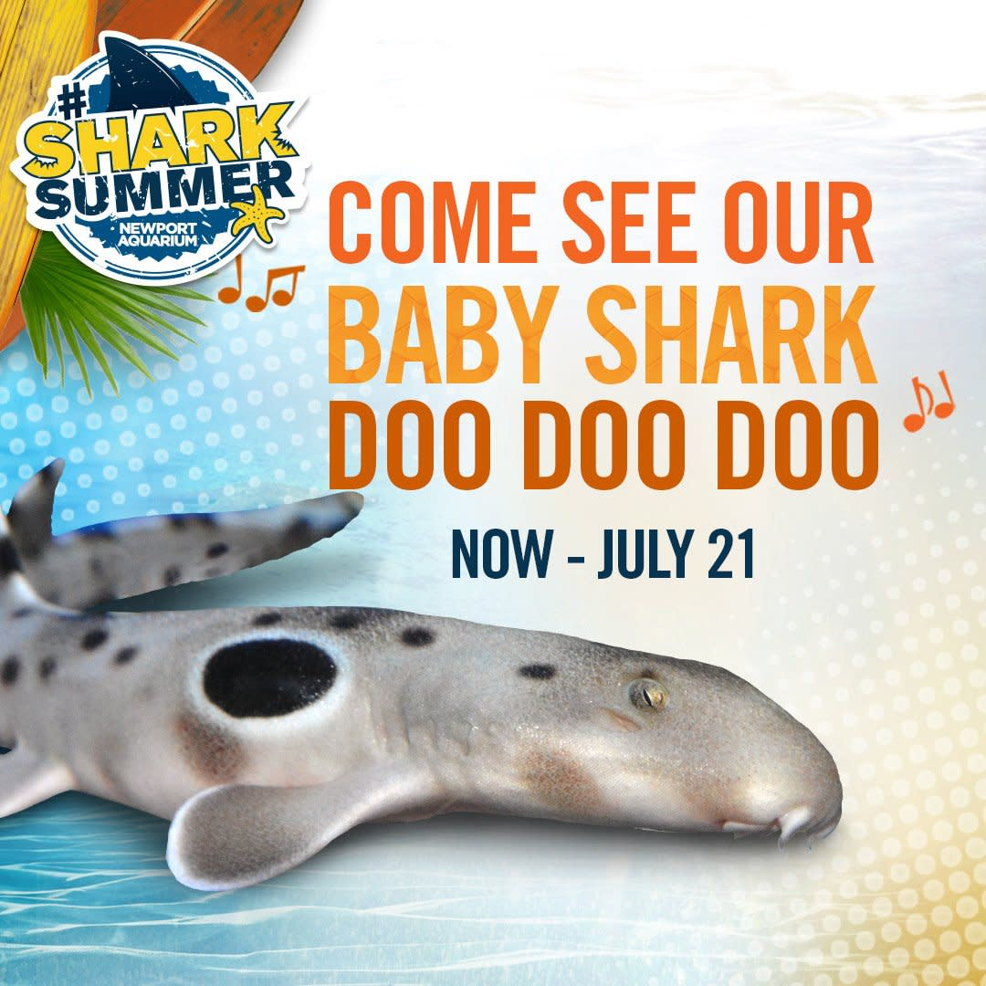 A sign for the Newport Aquarium's Shark Summer, featuring a photo of their new baby shark