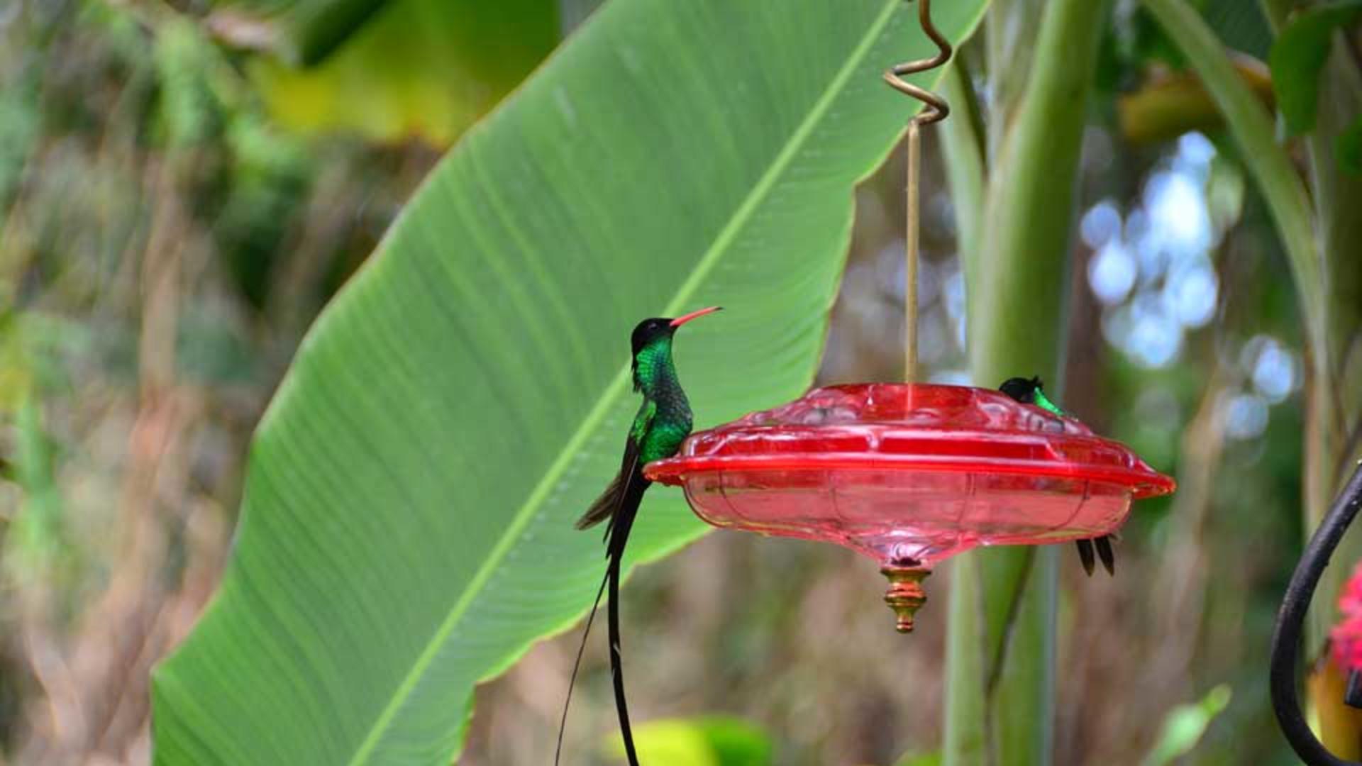 2013-Mystic-Mountain_humming-birds