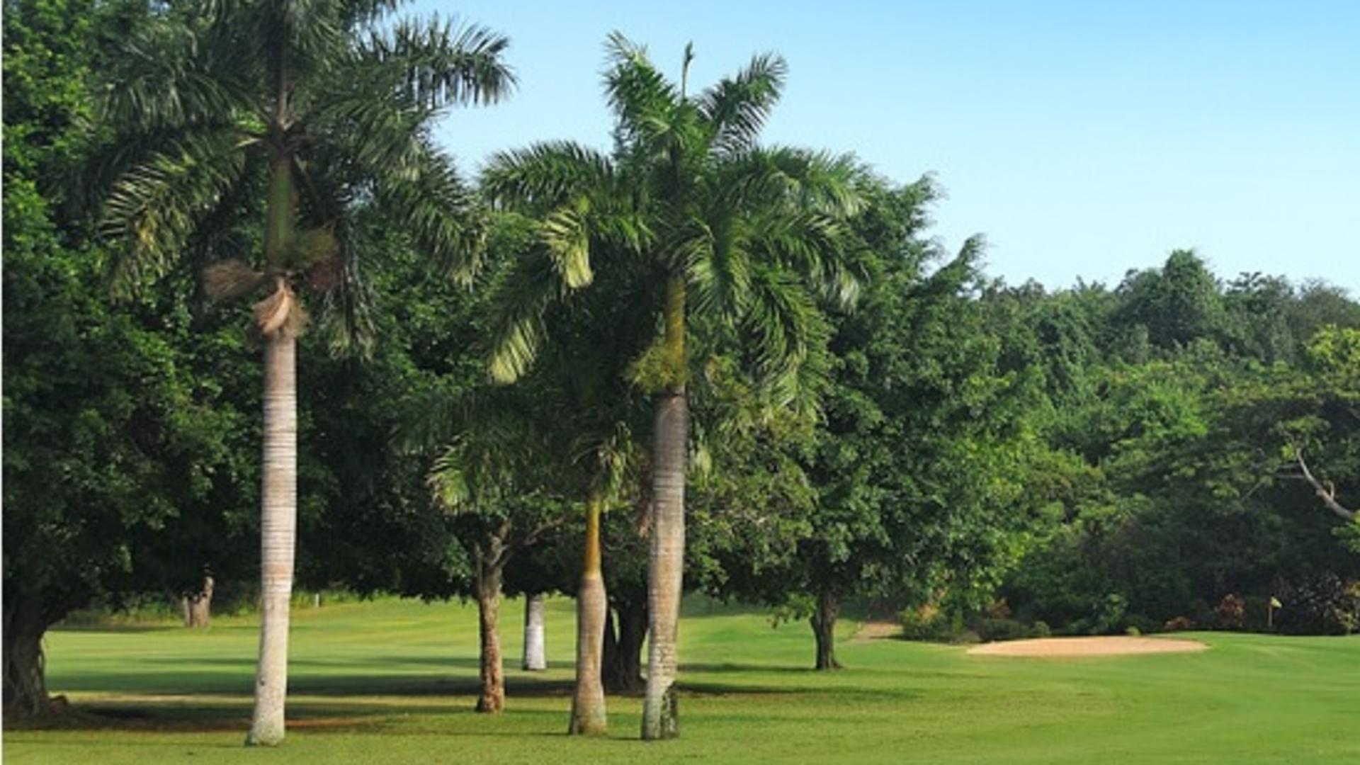 Caymanas Golf Club, Jamaica 2