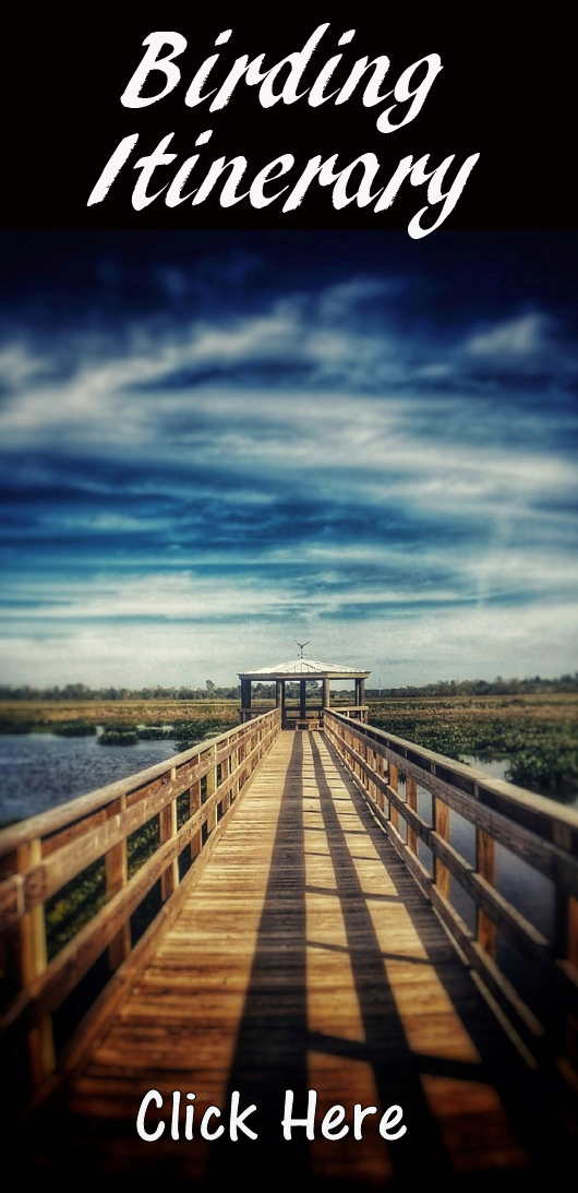 View of the Cattail Marsh Boardwalk Birding Itinerary PDF