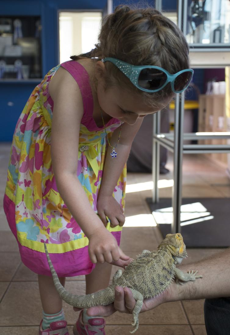 Bearded Dragon at OSC