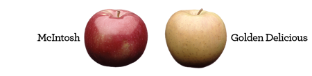 Mcintosh & Golden Delicious Apples