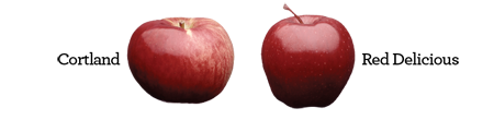 Cortland & Red Delicious Apples
