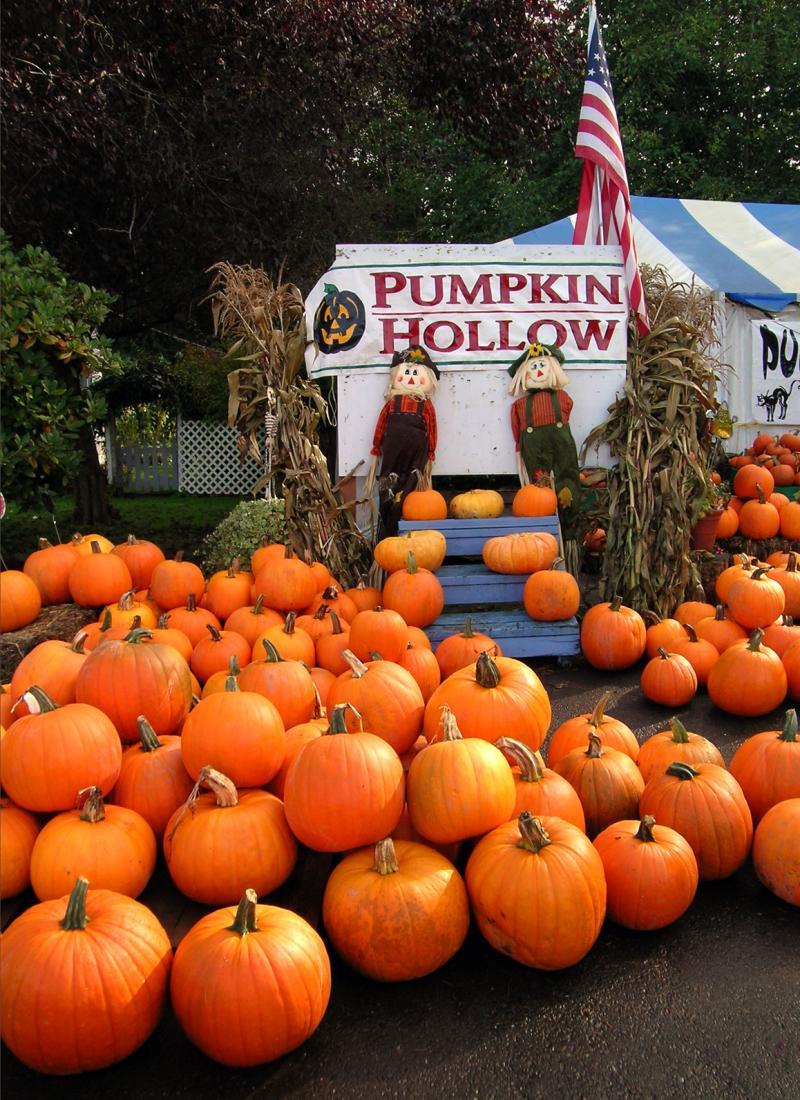 Pumpkins at the market