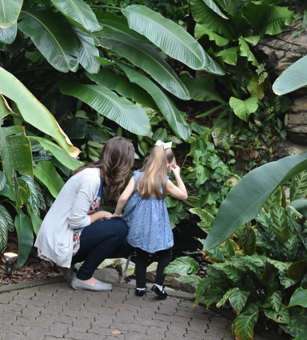 Botanical Conservatory - Indoor Winter Fun