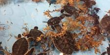 Sea Turtles at the Marine Science Center in Daytona Beach