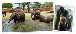 Sedgwick County Zoo Experience