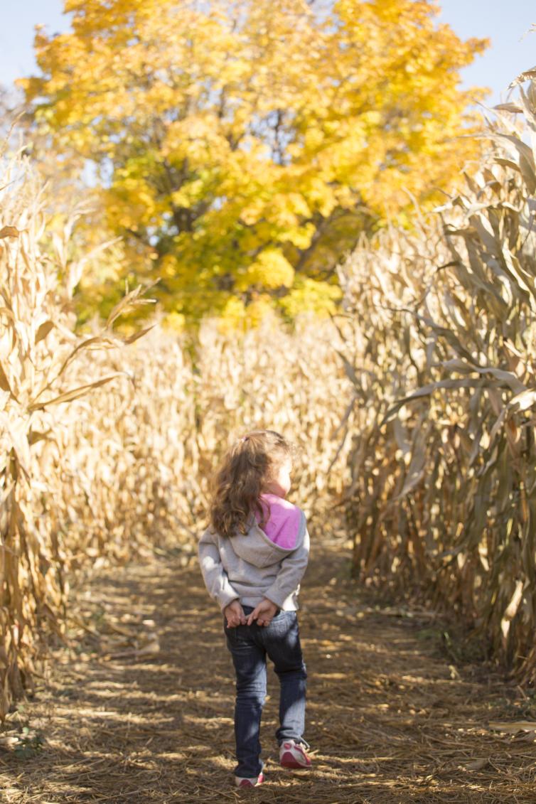 McMillan Farms Corn Maze