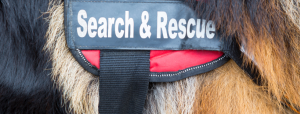 Close up of a Search and Rescue vest on a dog