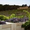 Wine Camp: Rhônes on the Ranch