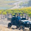 Vineyard Tours & The Ranch