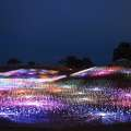 Field of Light at Sensorio
