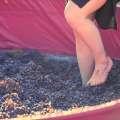 Harvest Festival Dinner & Grape Stomp