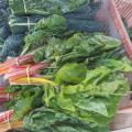 San Luis Obispo Farm Supply Farmers Market