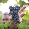 Wine Seminar - Get to Know Grenache