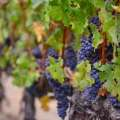 13th Annual Swiss Day & Grape Stomp at Vina Robles