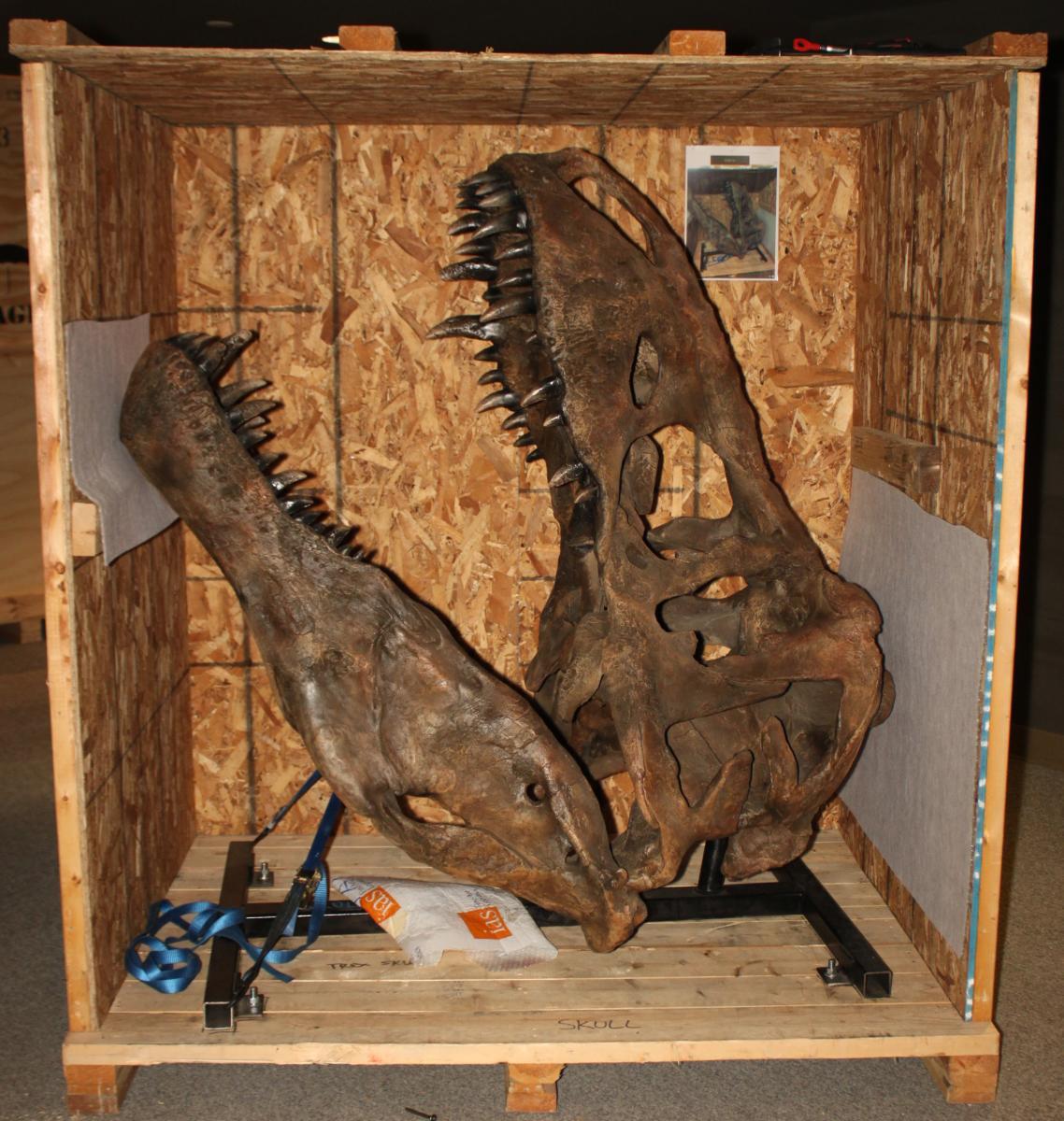 Tyrannosaurs: Meet the Family