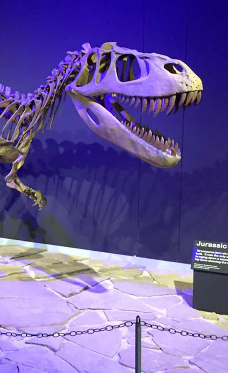 Tucumcari Mesalands Dinosaur Museum & Natural Sciences Lab
