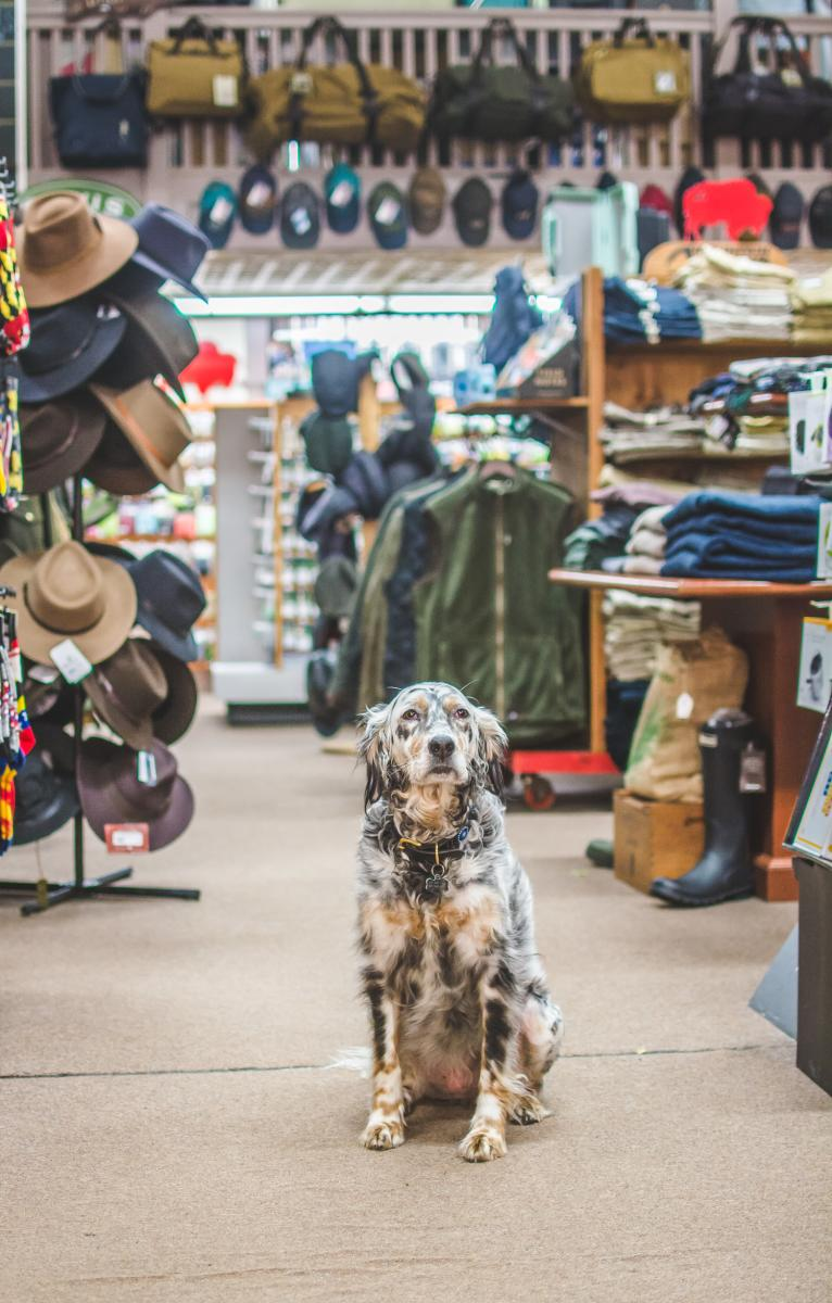 Hunting Creek dog, Maizey by hats, clothes and boots