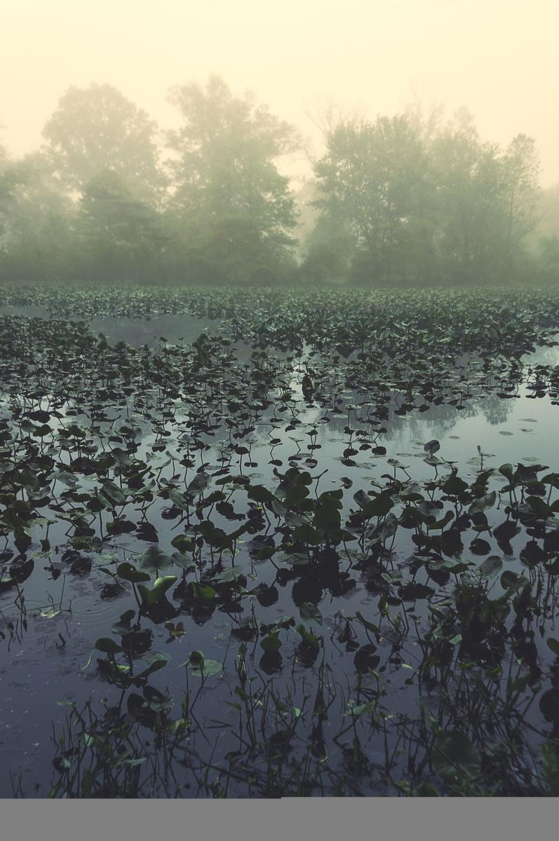 Silver Lake foggy morning
