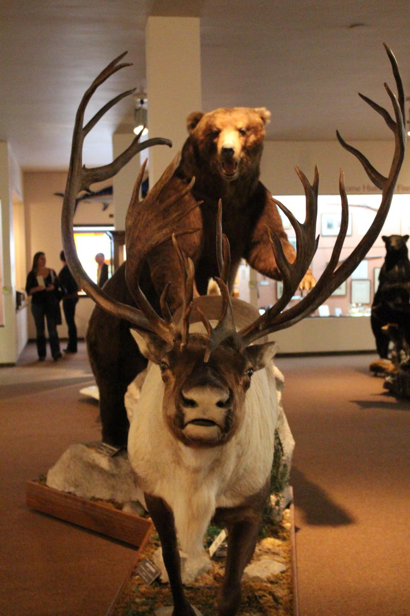 Nelson Museum of the West Bear and Caribou