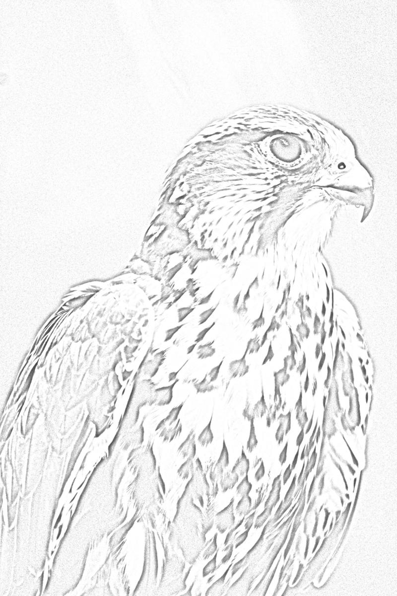 Carolina Raptor Center Coloring Page