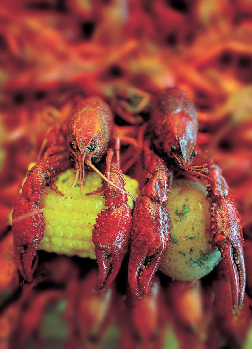 Crawfish in Beaumont