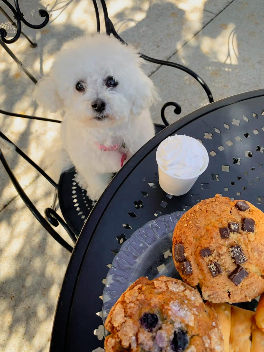 Puppy Begging For Muffins at Rao's Dog Friendly Restaurant