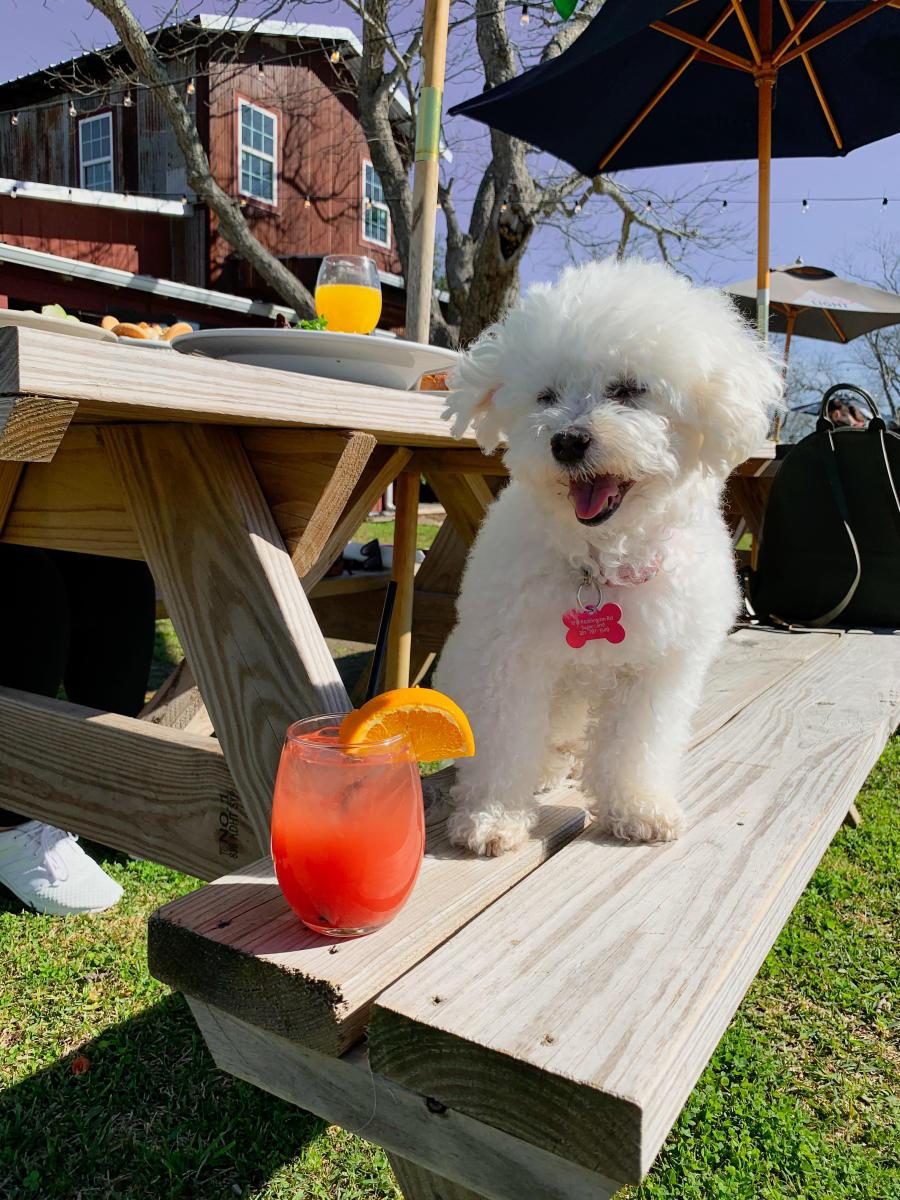 Dog Posing Next to Cocktail at Amelia Farm & Market