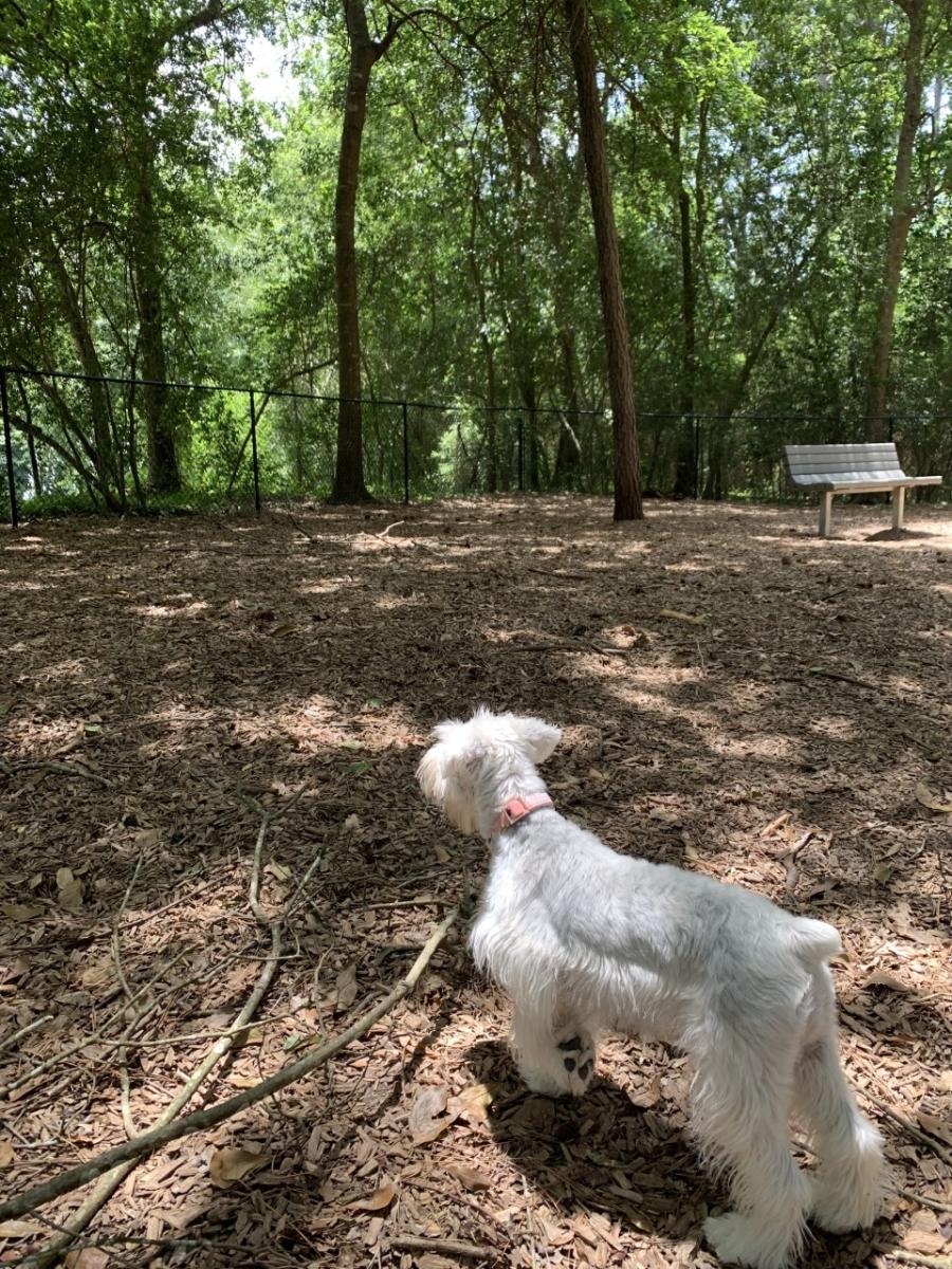 Tamarac Dog Park